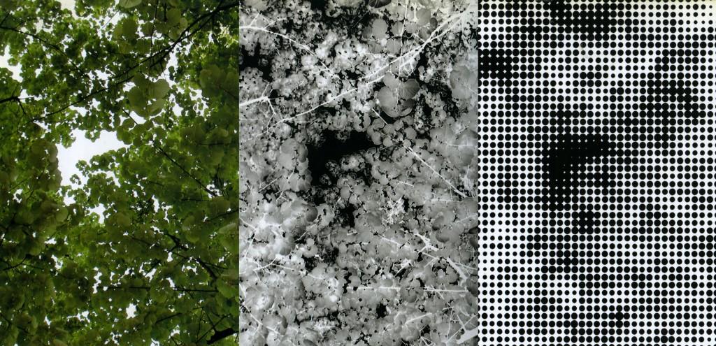 Sequenza della rielaborazione digitale delle foto degli alberi del Golden Gate Park © H&dM
